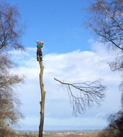 Man climbing tree