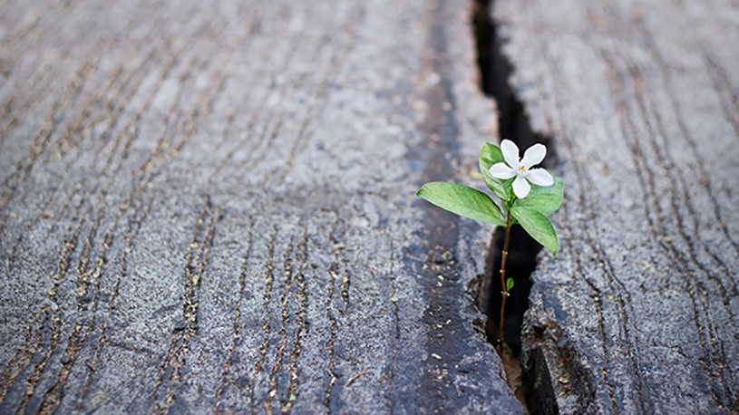 Blog post motivos para el optimismo