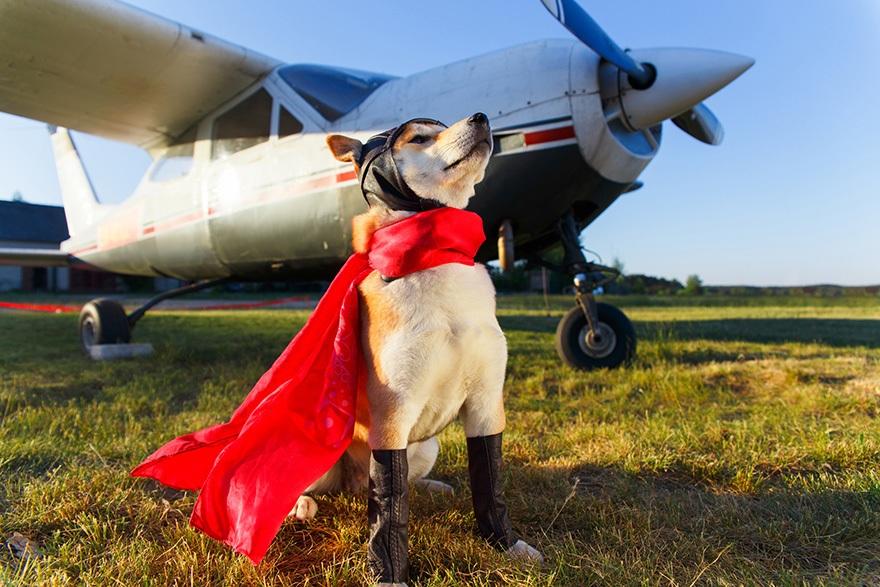 Perro vestido de piloto posando frente una avioneta