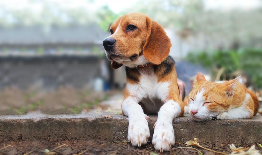 Starting A Pet Franchise Franchisedirect Co Uk